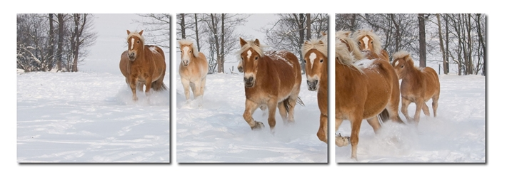 Baxton Studio Horse Herd Mounted Photography Print Triptych affordable modern furniture in Chicago, Baxton Studio Horse Herd Mounted Photography Print Triptych,  Decorating  Chicago